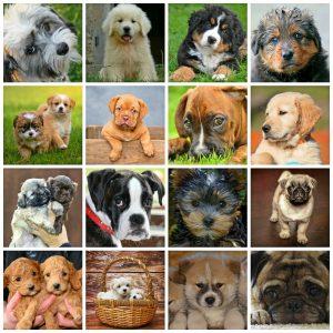 Dog Breed Lists Ruff Ruff