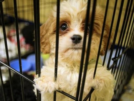 Dog in Kennel_Adopt a Dog_NewDogTimes.com