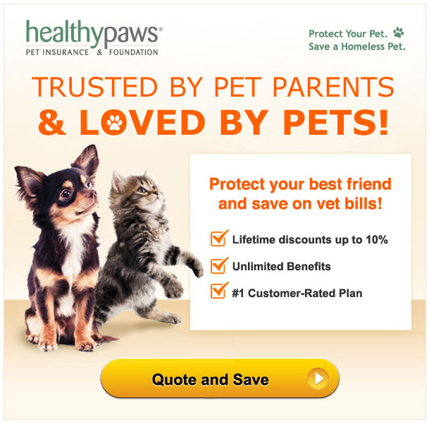 Insurance For Dogs NewDogTimes.com