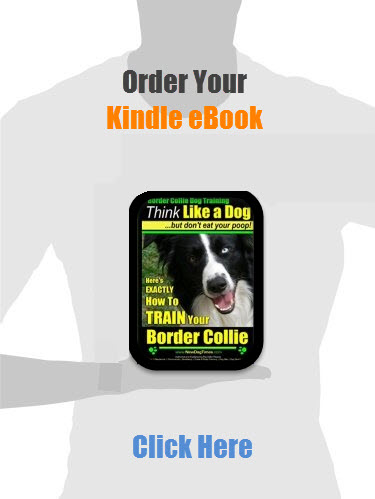 Border Collie Training Guide (eBook)