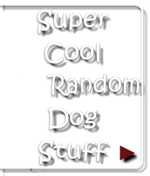 Super Cool Random Dog Stuff