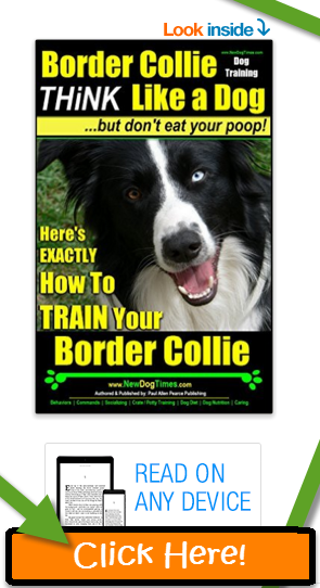Border Collie Training Guide