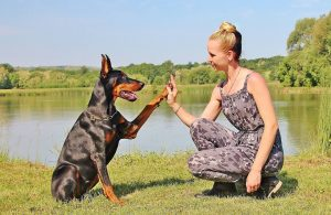 How to Train Your Doberman Pinscher