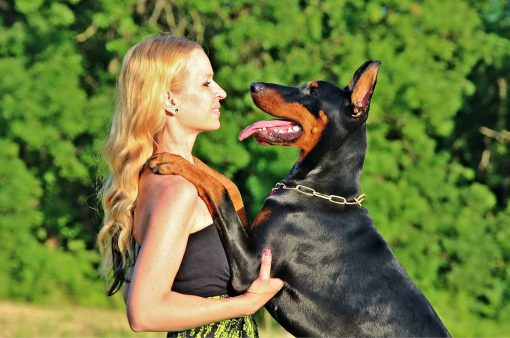 Training your Doberman Pinscher