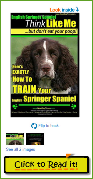 English Springer Spaniel Training Guide