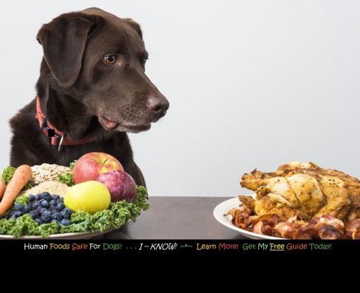 Human Foods Safe For Dogs