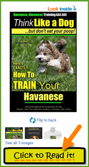 Havanese Training Book