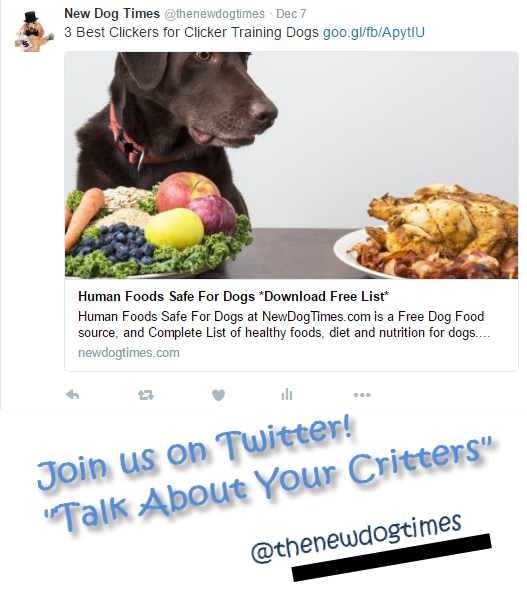 Join us on Twitter @NewDogTimes