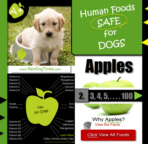 Green Apples and Human Foods Safe for Dogs | Green Apples for Dogs